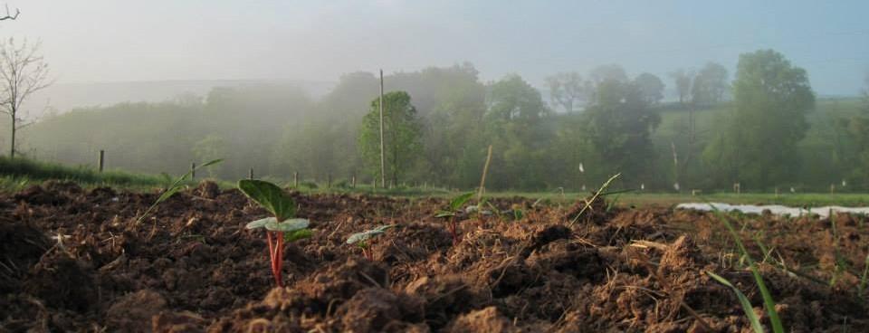 Csa Agreement Form Purple Sol Farm